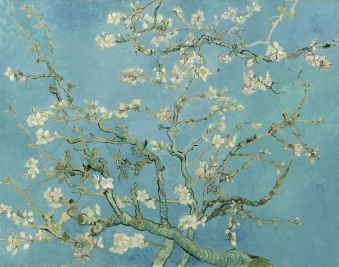 Vincent van Gogh source: http://en.wikipedia.org/wiki/Almond_Blossoms